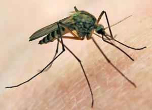Info par Zikas vīrusslimības gaitu